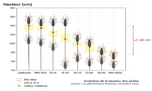 L'évolution des blés tendres